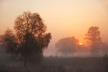 Foggy sunrise. forest fog. Lights of the forest. Beautiful morning scene in the forest with sun rays and long shadows