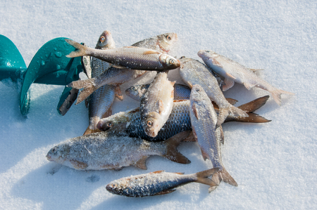 ice fishing.  auger for winter fishing. photo