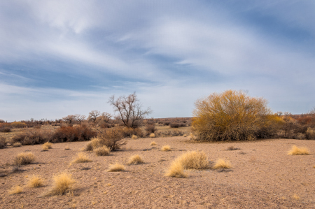 steppes of Kazakhstan, lonely tree in early spring.  Stock Photo