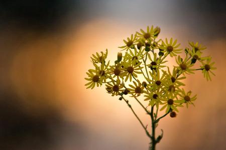 goodliness: flowers