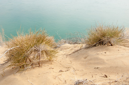 perianth: sand spring steppe Stock Photo