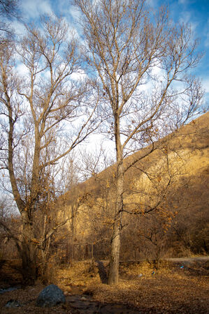 Early spring landscape with rocks and woods photo
