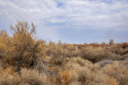 waterless: spring steppe. the nature wakes up after winter. last years grass with trees in the desert Stock Photo