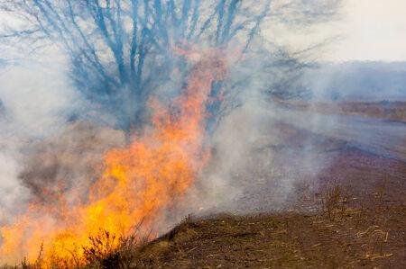 불타는 갈대. 불. 이른 봄, 시들은 갈대, 불의 부주의 한 취급