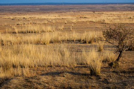 veldt: steppe Stock Photo
