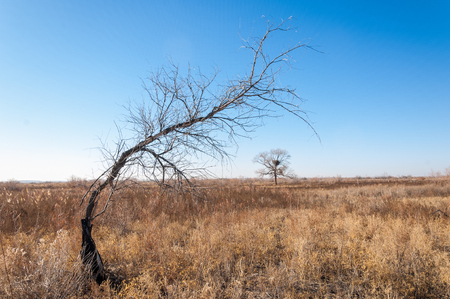 veldt: Steppe in the late autumn Stock Photo