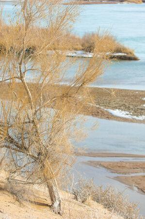 core eudicots: sand. spring. water. snow. Haloxylon. Central Asia,  Sinkiang,  Haloxylon ammodendron, Haloxylon persicum,  white saxaul, Saxaul Sparrow, Plantae, Angiosperms, Eudicots, Core eudicots, Caryophyllales, Amaranthaceae, Salsoloideae, dry, desert, sky, blue, n