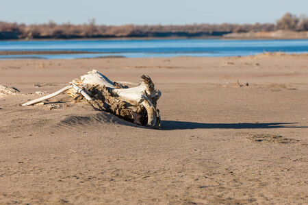 Snag on the shore. Beautiful nature composition. Dry tree on the foreground.  ilapidated wooden snag. Dry dead snag isolated.  Dry tree on the foreground photo