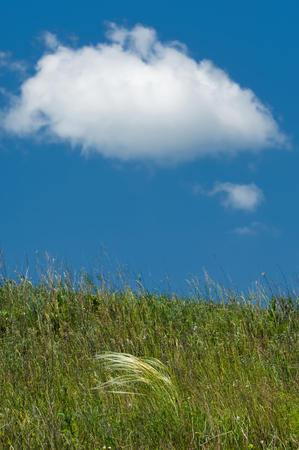 Summer beautiful wallpaper. In the summer landscape views. Spring canopy. green field and blue sky.  photo