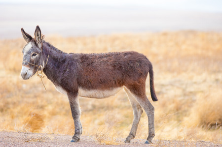 donkey in the desert in the early spring photo