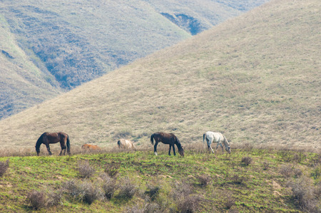 Horses graze in the mountains photo