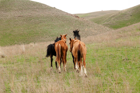 Horses graze in the foothills of the spring photo