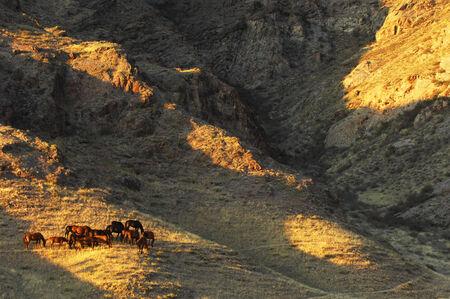 Horse  Summer is a hot day  Golden skin  rocks  Kazakhstan photo