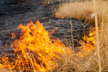 blasting: burning reeds. fire. early spring, withered reeds, careless handling of fire Stock Photo