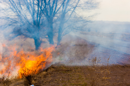 careless: burning reeds. fire. early spring, withered reeds, careless handling of fire Stock Photo