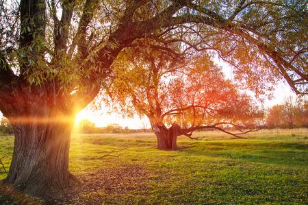 Sunset in autumn. Sunset in autumn forest. Beautiful sunrise on the field. halo, aureole, halation, nimbus, glory, aureola photo