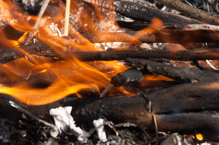 fire . Fire disaster. high temperature raised fire. burn natural dry vegetation