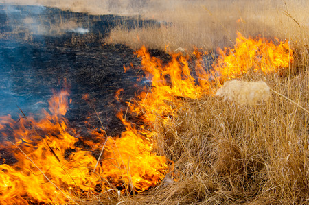 burning reeds. fire. early spring, withered reeds, careless handling of fire Banco de Imagens