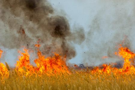갈대을 레코딩합니다. 화재. 이른 봄, 시든 갈대, 화재의 부주의