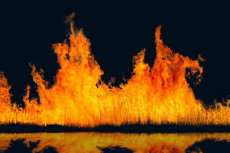 burning reeds. fire. early spring, withered reeds, careless handling of fire Stockfoto