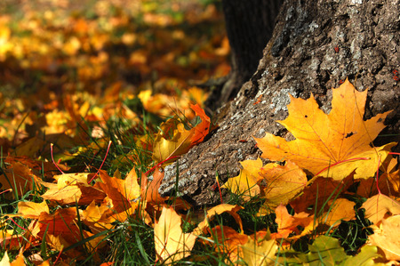 autumn Stock Photo - 31944784