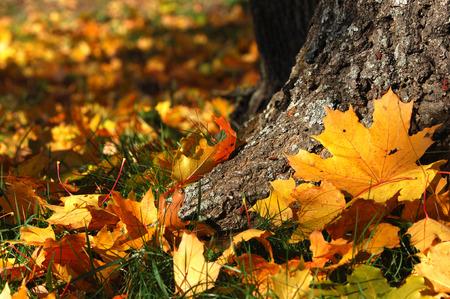 germanic: autumn