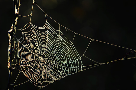 woven web of the spider, dew on a spider web Stock Photo - 32608711