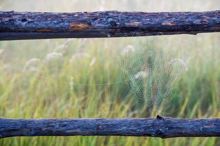 woven web of the spider, dew on a spider web.  web, cobweb, spiderweb, spiders web, net, tissue photo