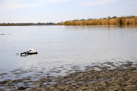 hydrological: River  Ili in Kazakhstan. Stock Photo