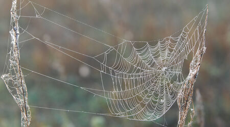 secreted: trap, snare, hook, pitfall, catch, cobweb. woven web of the spider. a network of fine threads constructed by a spider from fluid secreted by its spinnerets, used to catch its prey. Stock Photo