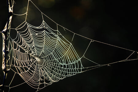 morning dew: trap, snare, hook, pitfall, catch, cobweb. woven web of the spider. a network of fine threads constructed by a spider from fluid secreted by its spinnerets, used to catch its prey. Stock Photo