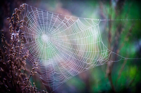 spider web: woven web of the spider, dew on a spider web Stock Photo