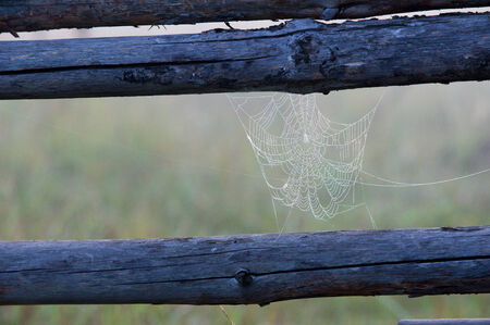 woven web of the spider, dew on a spider web.  web, cobweb, spiderweb, spiders web, net, tissue photo