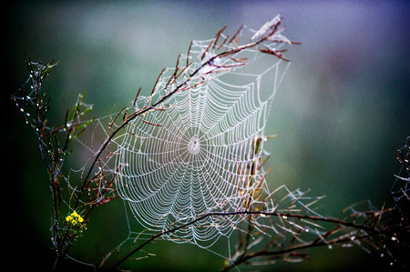 woven web of the spider, dew on a spider web 写真素材