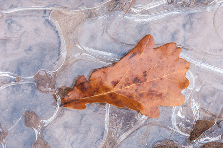 puddle of ice. Oak leaf in autumn. Mysterious figure ice photo