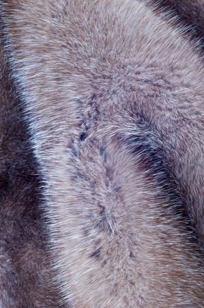 visone: Mink fur texture. Mink coat fotografato in studio Archivio Fotografico