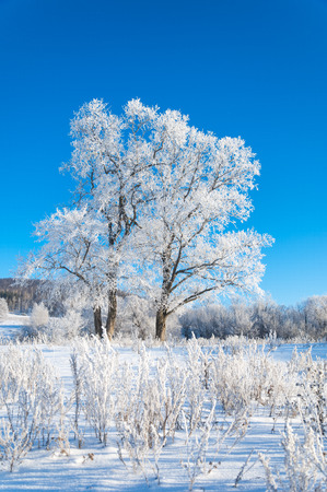 winter, winter-tide, winter-time,  hibernate, he coldest season of the year photo