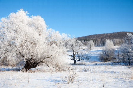 winter, winter-tide, winter-time,  hibernate, he coldest season of the year Stock Photo