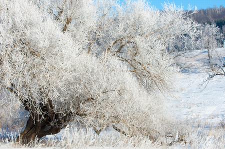 hibernate: winter, winter-tide, winter-time,  hibernate, he coldest season of the year Stock Photo