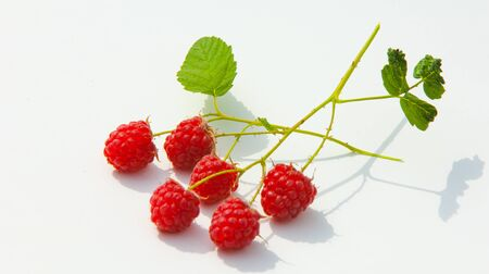 stash: raspberry, razz, fence, stash. an edible soft fruit related to the blackberry, consisting of a cluster of reddish-pink drupelets.
