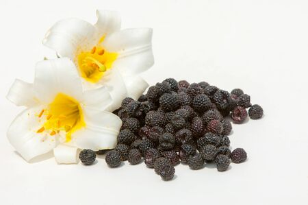 drupe: black raspberries. an edible soft fruit , consisting of a cluster of black drupe lets. Stock Photo