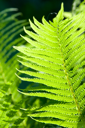 fronds: fern, brake. a flowerless plant that has feathery or leafy fronds and reproduces by spores released from the undersides of the fronds.