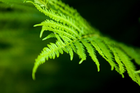spores: fern, brake. a flowerless plant that has feathery or leafy fronds and reproduces by spores released from the undersides of the fronds.