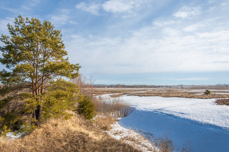 springtide: Spring in the field. last snow. pine tree. springtime, springtide, prime