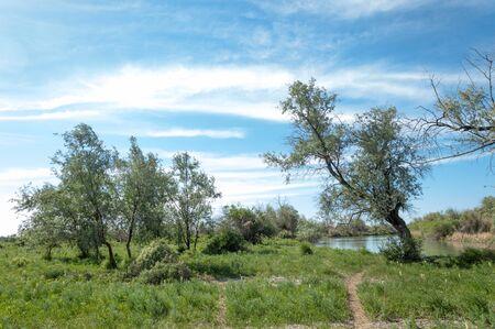 veld: steppe, prairie, veldt, veld, flood plain Stock Photo