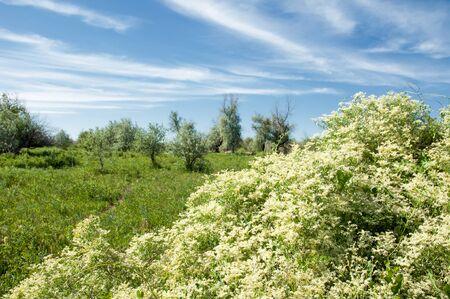 veldt: steppe, prairie, veldt, veld, flood plain. beautiful nature in the steppes of Kazakhstan