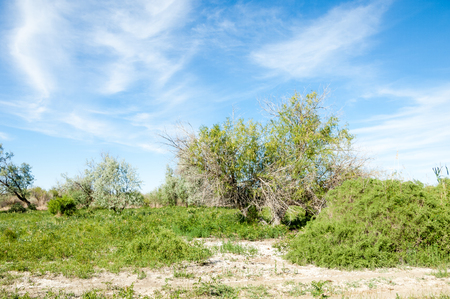 veld: steppe, prairie, veldt, veld, flood plain. beautiful nature in the steppes of Kazakhstan