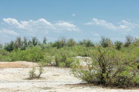 scorched: Steppe saline soils. saline  salt  in salt.  steppe  prairie  veldt veld. Saline soils of the desert, salt lakes,.  lifeless scorched earth. bare steppe of Kazakhstan