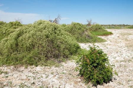 veld: Steppe saline soils. saline  salt  in salt.  steppe  prairie  veldt veld. Saline soils of the desert, salt lakes,.  lifeless scorched earth. bare steppe of Kazakhstan