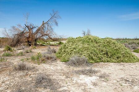 veldt: Steppe saline soils. saline  salt  in salt.  steppe  prairie  veldt veld. Saline soils of the desert, salt lakes,.  lifeless scorched earth. bare steppe of Kazakhstan
